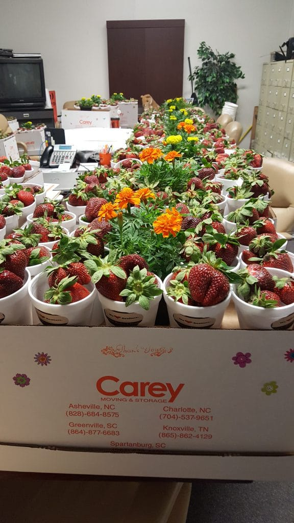 Carey Moving Company delivers strawberries for local real estate partners