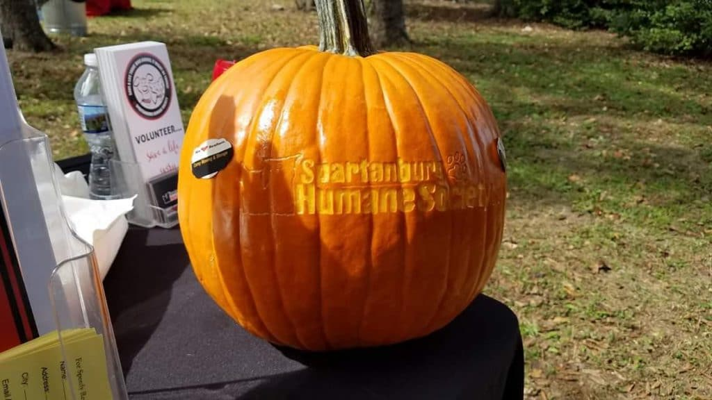 Pumpkin with Spartanburg Humane Society carved into it